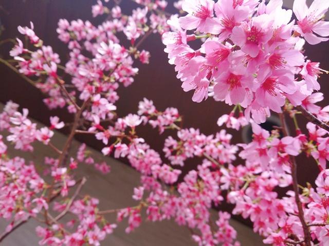 富士桜3 | 大阪市平野区 |オアシス本部事務所