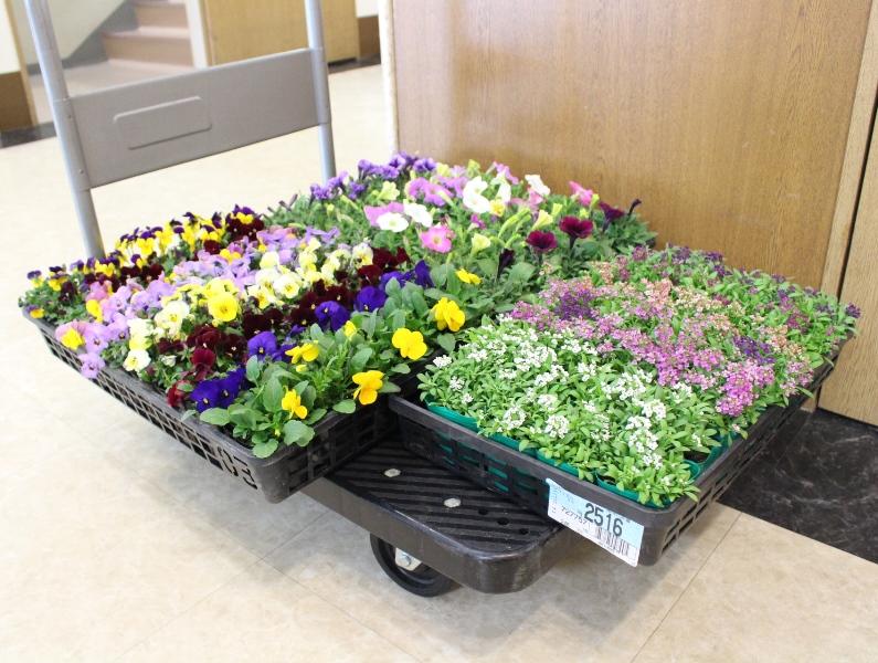 介護老人保健施設オアシス デイケア・ロング お花の入れ替えをしました1
