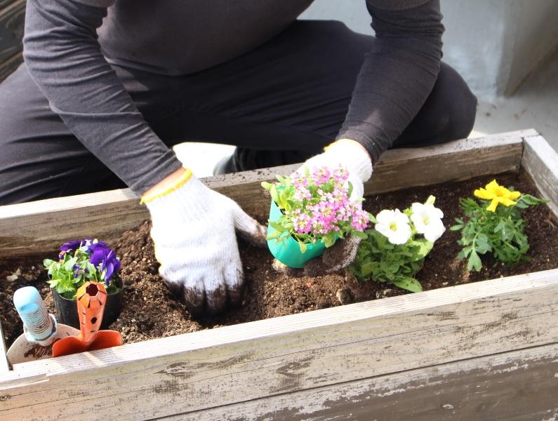 介護老人保健施設オアシス デイケア・ロング お花の入れ替えをしました3