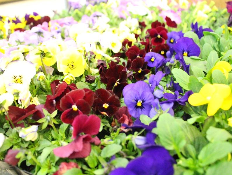 介護老人保健施設オアシス デイケア・ロング お花の入れ替えをしました2