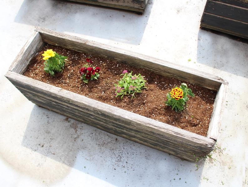 介護老人保健施設オアシス デイケア・ロング お花の入れ替えをしました6