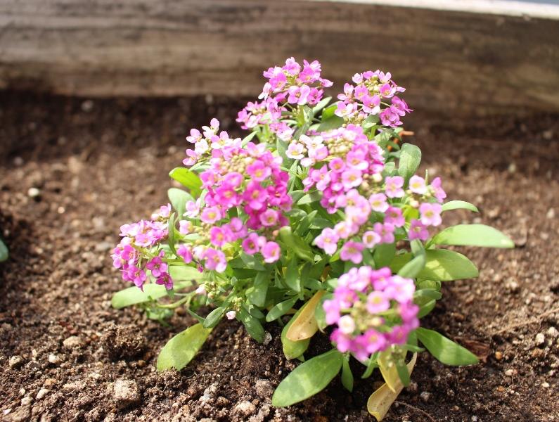 介護老人保健施設オアシス デイケア・ロング お花の入れ替えをしました8