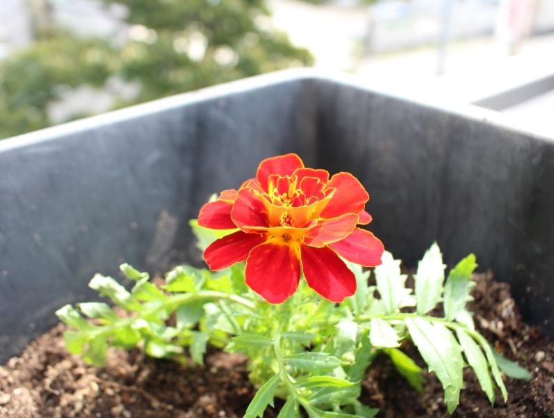 介護老人保健施設オアシス デイケア・ロング お花の入れ替えをしました9